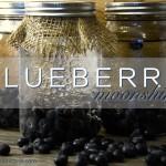 blueberry moonshine